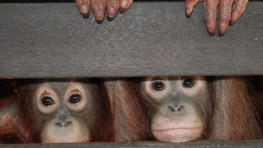 La ONG Robin des Bois lanza 'El Atlas del Negocio de Especies Amenazadas', una investigación del contrabando de seres vivos