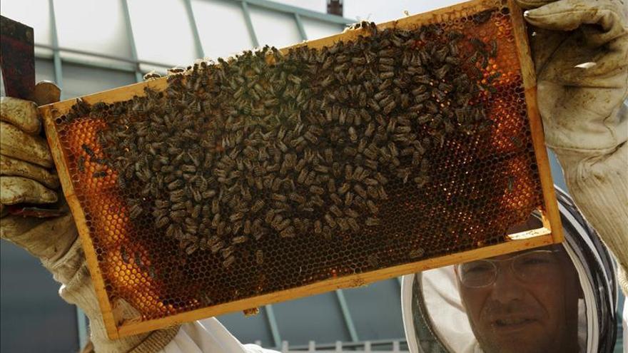 Colmenas de abejas habitan el tejado del Museo de Arte Moderno de