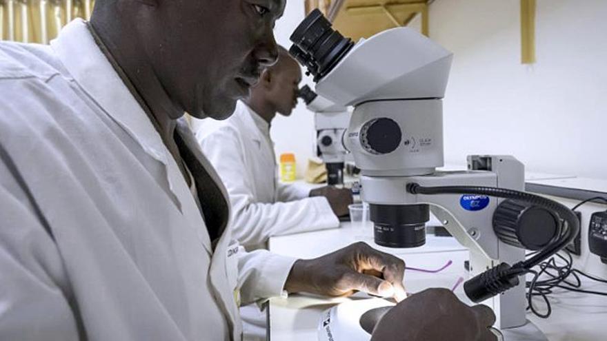 Los controvertidos mosquitos transgénicos de Burkina Faso contra la malaria