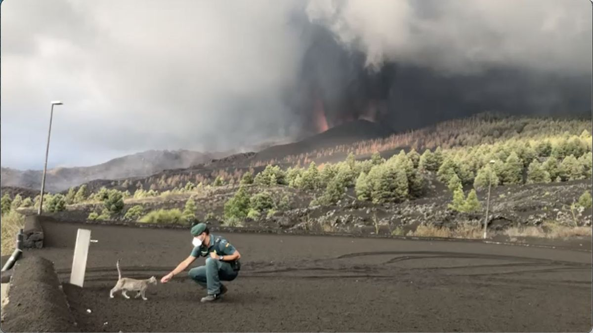 Un agente de la Guardia Civil tranquiliza a un gato en la zona próxima al volcán. Foto: GUARDIA CIVIL