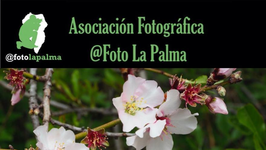 Cartel de la  VII Quedada Almendros en Flor de Afoto La Palma.