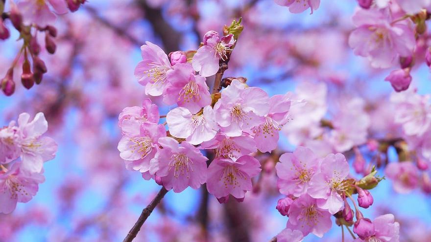 Ikigai es una técnica de origen japonés, centrada en mejorar el día a día de las personas.