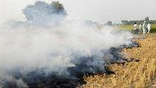 Quemar rastrojo asfixia a Delhi y prohibirlo ahoga a los agricultores