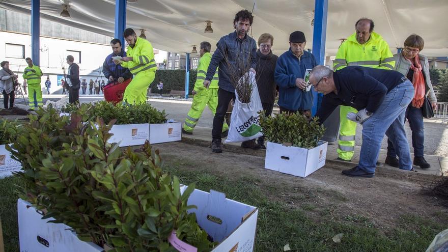 Camargo inicia este viernes la XXVI Campaña de Repoblación Forestal