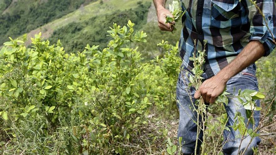 Acuerdan un plan con campesinos del Catatumbo para sustituir cultivos de coca