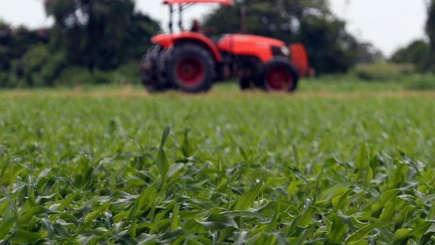 Murcia valida un decreto ley que limita los cultivos y suspende las construcciones