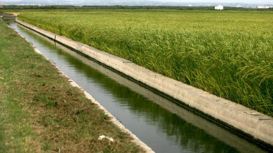 Campo de arroz valenciano