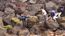 El Cabildo de Tenerife recupera el cadáver de un delfín adulto común en la costa de La Matanza