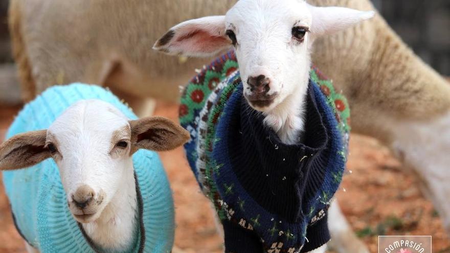 El santuario de animales de granja en Enguera alberga cerca de 300 animales que viven gracias a donaciones particulares