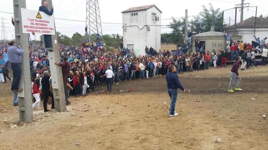 Barreda humana formada por los manifestantes contra el Toro de la Vega. | LARO GARCÍA