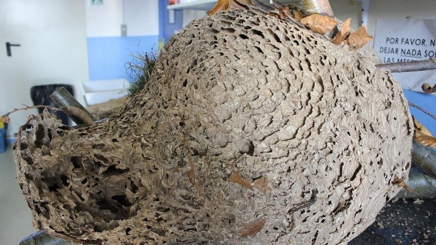 """Los apicultores cántabros ven """"inasumible"""" el borrador del protocolo de la avispa asiática"""