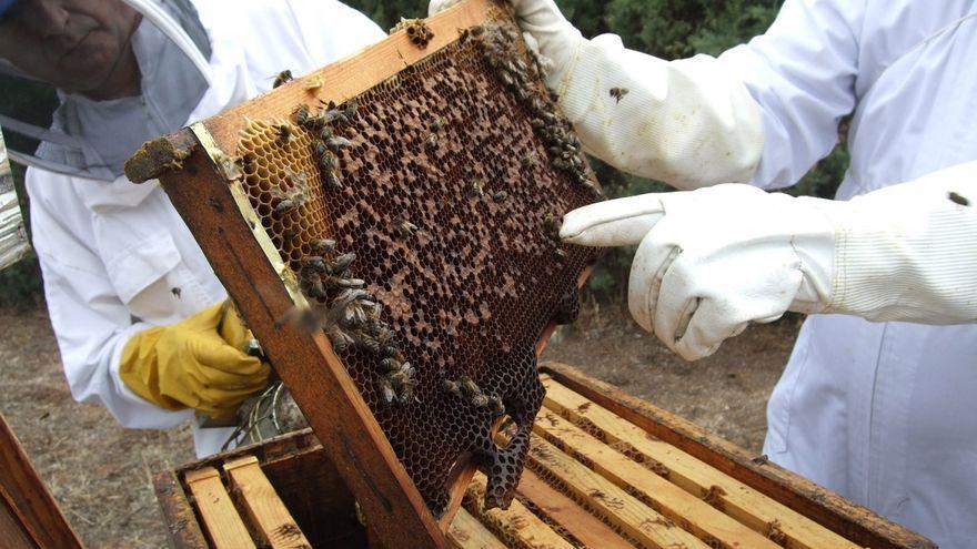 Gran Canaria destina 38.000 euros al sector apícola para equipar colmenas y envasar miel