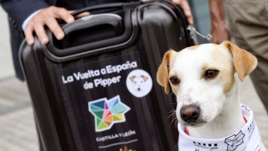 "Pipper, el primer perro español ""influencer"" en turismo de mascotas"