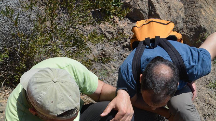 Miembros de Patrimonio Santomera examinan los petroglifos