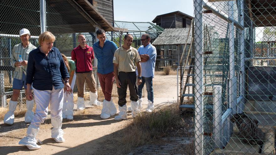 Pedro Sánchez y Angela Merkel en el centro de El Acebuche, conociendo el trabajo para la recuperación del lince ibérico