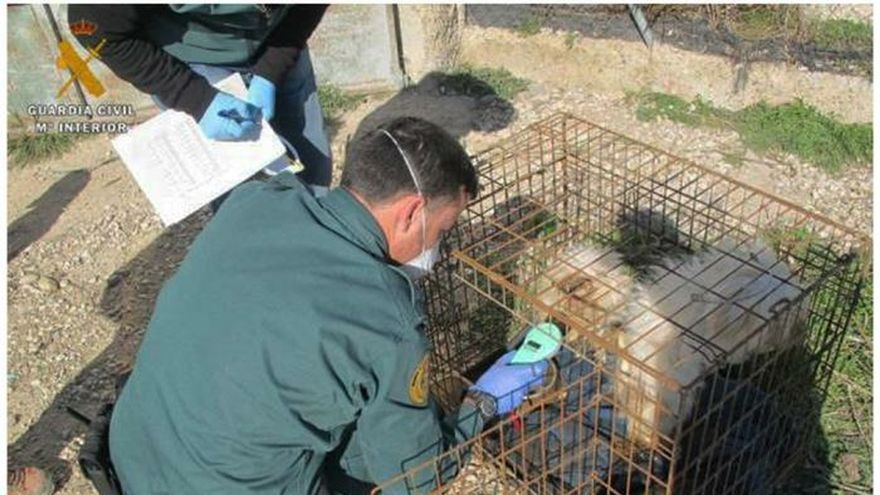 Hallados 5 perros muertos y 7 en pésimo estado en un criadero ilegal
