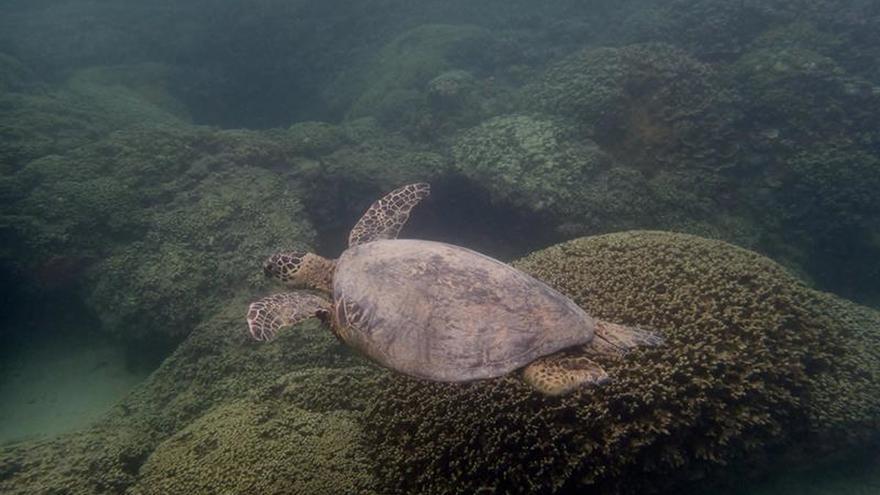 Los Compromisos de Hawai, nueva hoja de ruta para la conservación