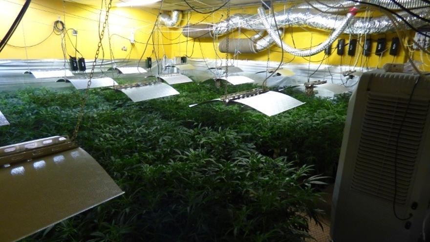 Localizan en Vitoria 500 plantas de marihuana en el polígono industrial de Betoño