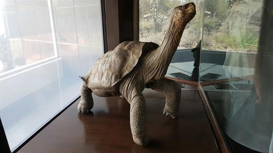 """Unas 1.300 personas visitaron a """"George"""", tortuga emblemática de Galápagos"""