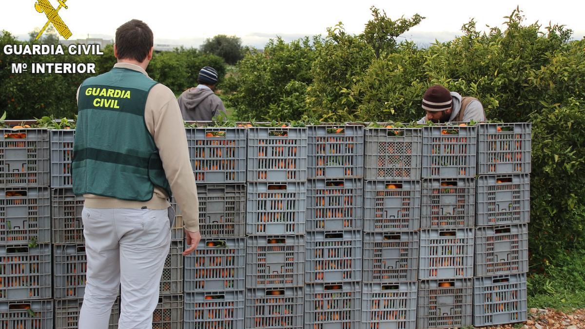La Guardia Civil ha comprobado que los 22 trabajadores que vivían en la granja son argelinos en situación irregular.