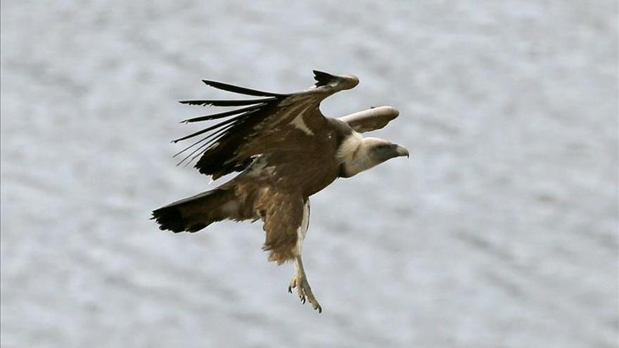Aragón promociona el turismo ornitológico en la Feria de Monfragüe