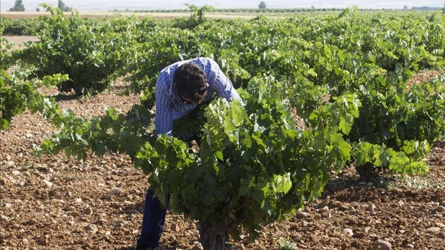 """Crónicas de vendimia: """"pasión"""" del viticultor por mantener vivo el """"terroir"""""""