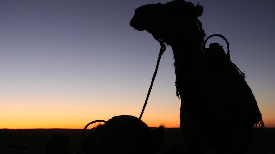 El Sáhara se esparce por casi la mitad del estado tunecino.