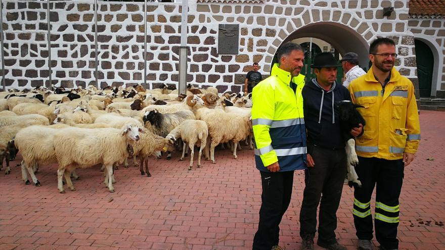 El consejero Miguel Ángel Rodríguez junto al pastor Airam Rivero (c) y el técnico de Medio Ambiente Didac Díaz