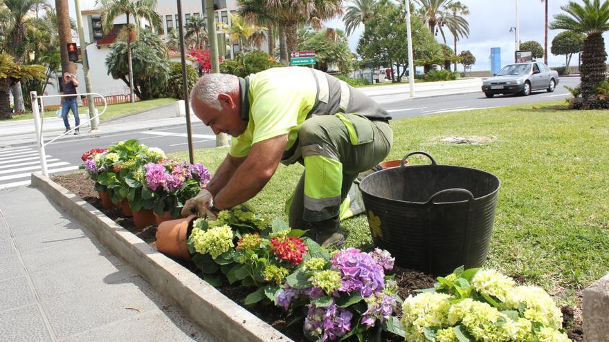 Un jardinero coloca flores en un parterre.