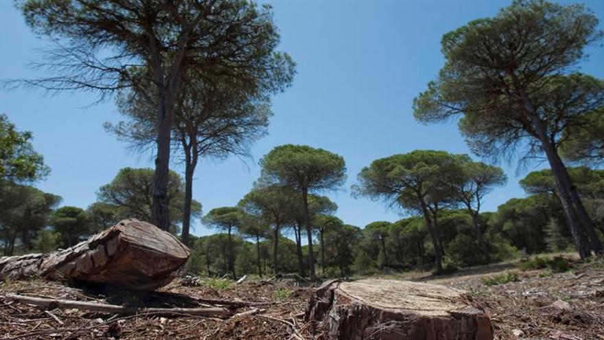 Un proyecto busca modernas soluciones para las nuevas amenazas del bosque