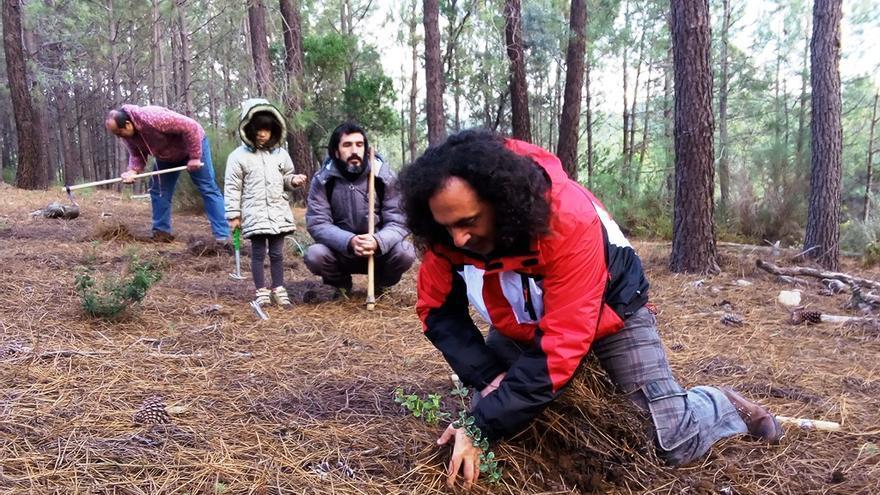 Voluntarios repueblan una de las vías pecuarias de Sierra de Gata dentro de la campaña 'Cada extremeño, un árbol'