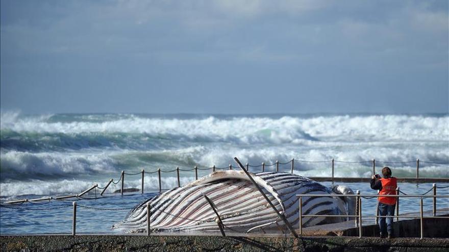 Mueren 39 ballenas piloto tras quedarse varadas en una playa de Nueva Zelanda