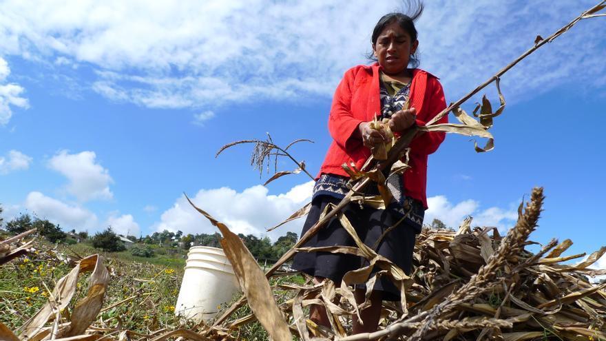 Mujer desgranando maíz en Zautla, México. (Yago de Orbe / Ayuda en Acción)
