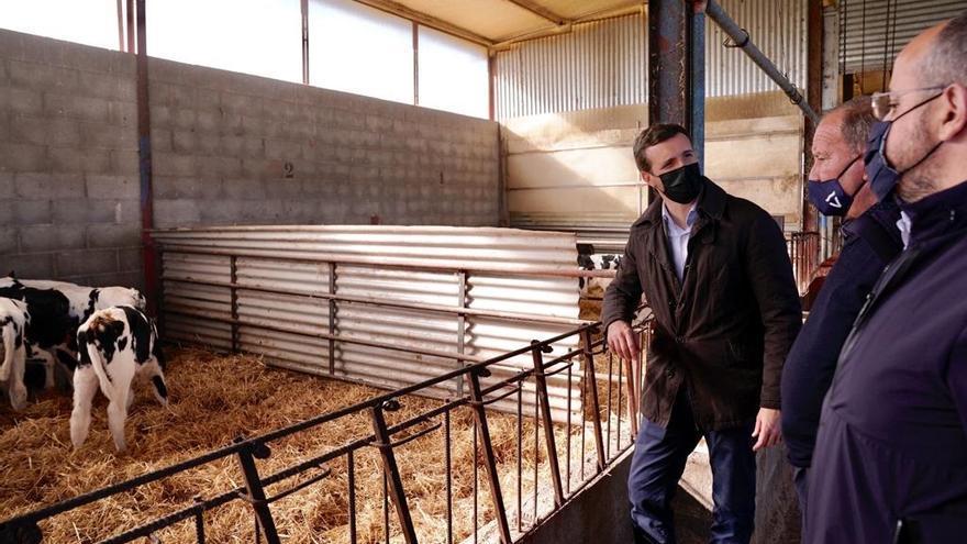 Pablo Casado, presidente del PP, visitando una explotación ganadera en Alcarrás (Lleida)