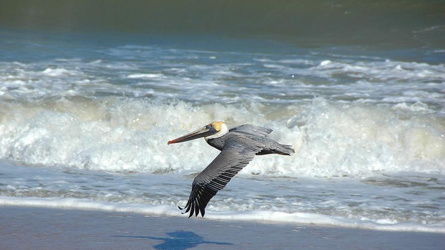 El 8 de Junio se celebra el Día Mundial de los Océanos.