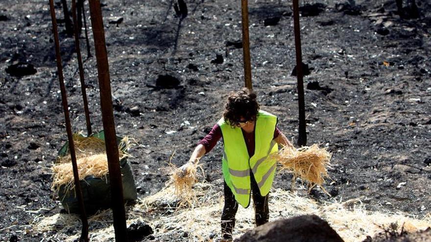 Los abogados gallegos asesorarán gratis a los afectados por los incendios