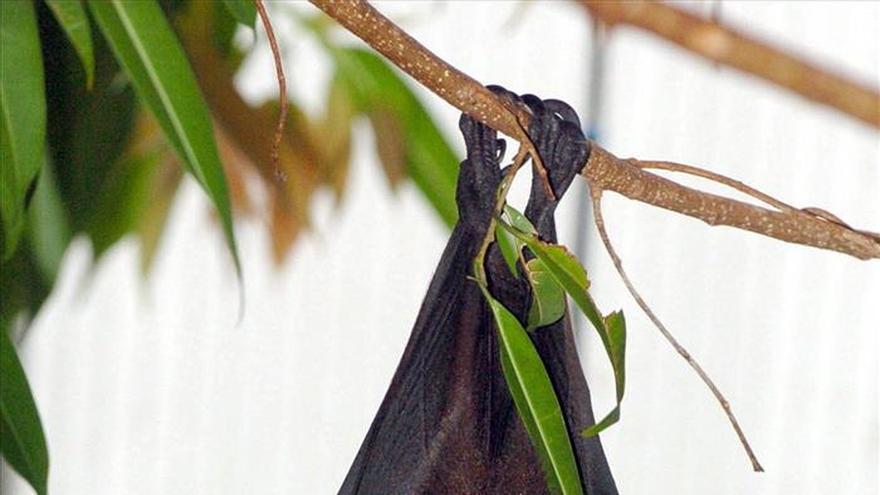 Comerse un murciélago también es cultura