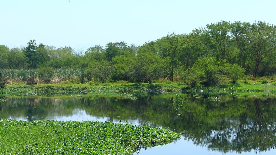 Guedes está rodeado por los ríos Iguaçu y Sarapuí y parece brotar de un oasis verde, ya que el área está cercada de manglares y taboas [espadaña tropical], una planta que crece en regiones pantanosas.