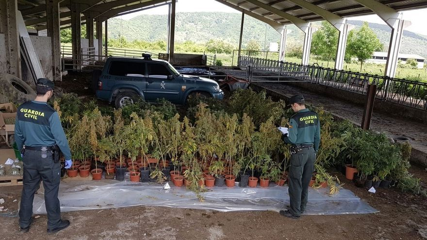 Desmantelada en Basaburua una plantación de marihuana oculta en una explotación agrícola