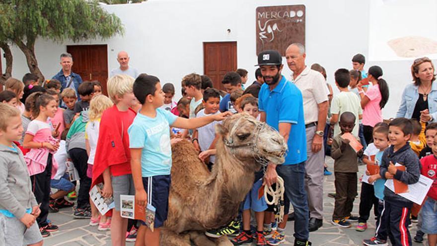 Camello canario.