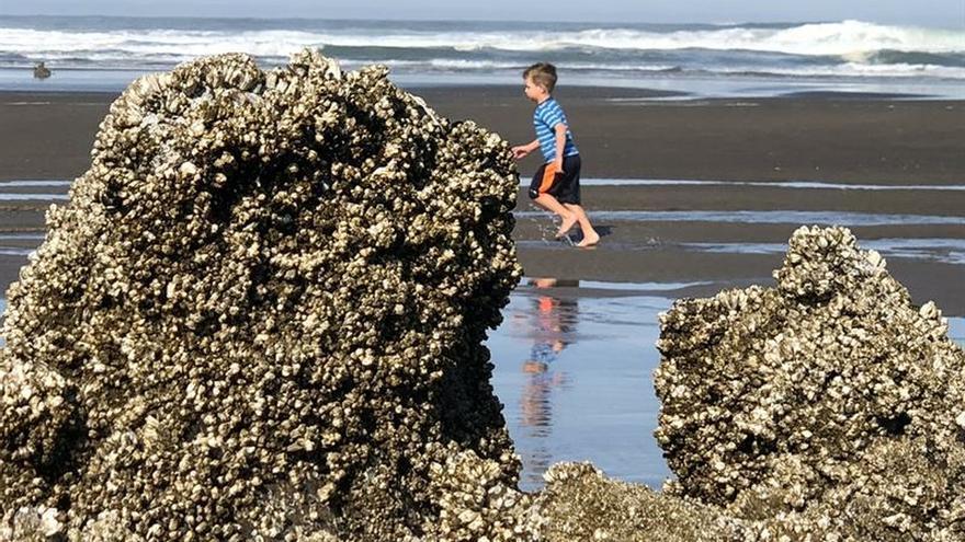 Los niños más expuestos a la naturaleza tienen mejor salud mental de adultos