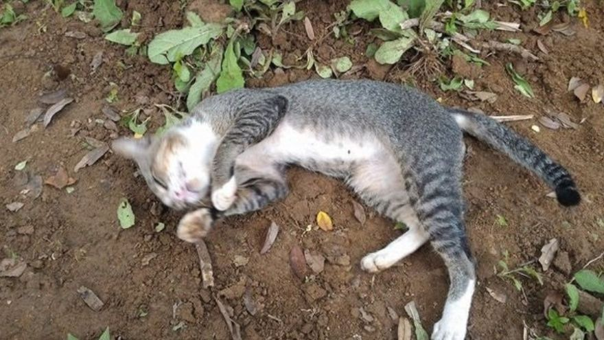 Detenida en Toledo como presunta autora de la muerte a golpes de un gato con tres días de vida