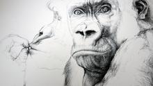 'Batanga' (Zoo de Barcelona, 2011). De la serie 'Grandes simios en femenino'.