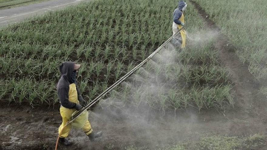La ONU advierte que los plaguicidas pueden tener consecuencias muy perjudiciales sobre derecho a la alimentación