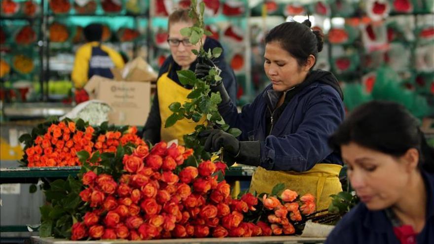 Colombia inunda con sus flores los mercados mundiales en el Día de San Valentín