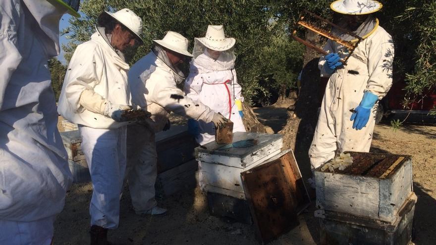 La producción de miel cae a los 252.000 kilos en esta campaña por las altas temperaturas veraniegas, según COAG