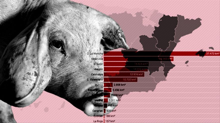 Spain pays an air and water pollution toll for becoming the world's pig factory