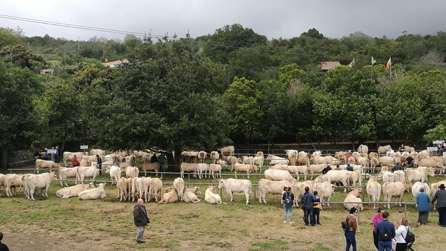 Panorámica de la Feria de Ganado de Breña Alta este sábado.