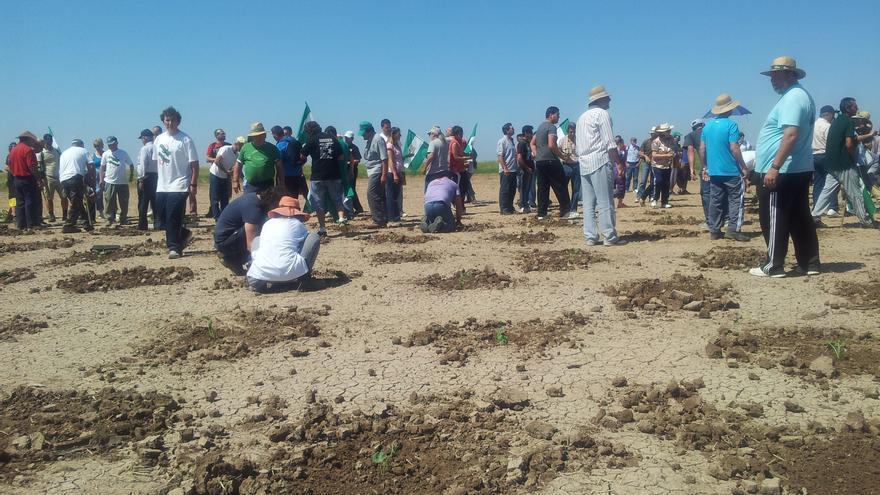 Jornaleros del SAT siembran frutas y hortalizas en Las Turquillas para garantizarse abastecimiento en verano