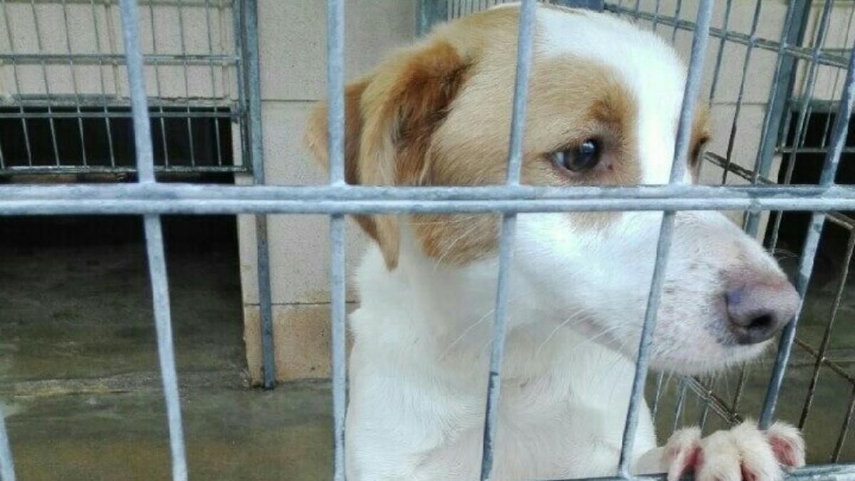 Un perro en una jaula.